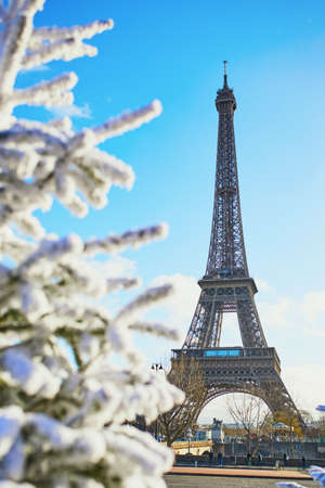 Christmas tree covered with snow near the Eiffel tower in Paris. Celebrating seasonal holidays in France Standard-Bild - 132470426