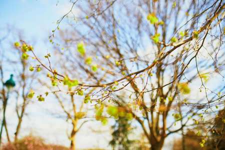 Tree branch with first green leaves on it on a spring day