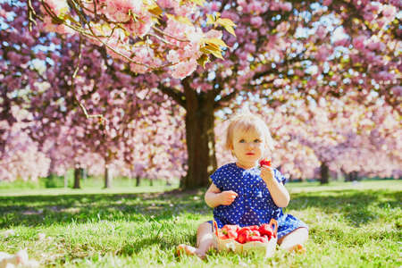 Cute one year old girl sitting on the grass and eating strawberries. Kid in park at sunny weather and cherry blossom season
