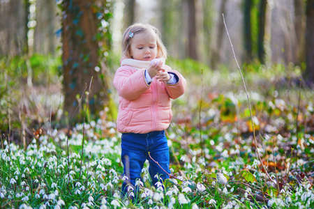 Cute little girl playing egg hunt on Easter. Toddler looking for colorful eggs in the grass with many snowdrop flowers. Little kid celebrating Easter outdoors in forest. Early Easter with cold weather