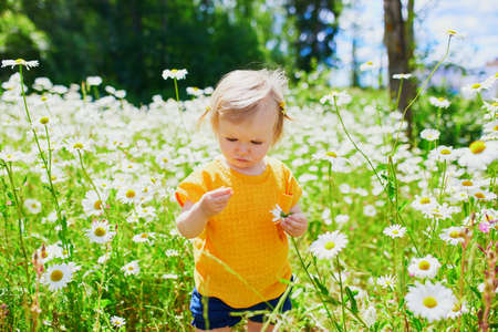 Adorable baby girl amidst green grass and beauitiful daisies on a summer day. Little child having fun outdoors. Kid exploring nature