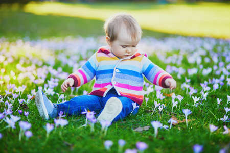 Baby girl in knitted clothes sitting on the grass with purple crocuses. Little child outdoors on a spring day. Toddler having fun with flowers