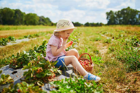 Adorable toddler girl in straw hat picking fresh organic strawberries on farm. Delicious healthy snack for small children. Outdoor summer activities for little kids