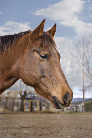 Vertical profile image of a pretty brown horse with a diffused countryside background.