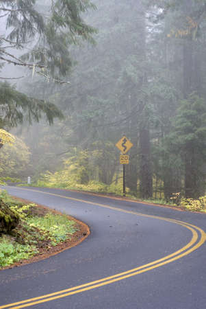 Windy forest road with a curve sign on a foggy day.