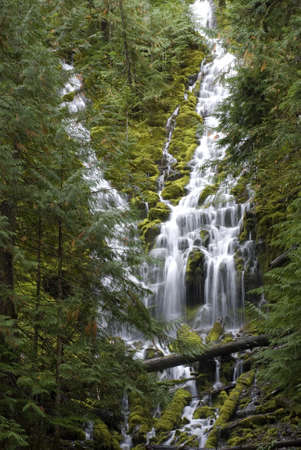 proxy falls: Lower Proxy Falls, waterfall in the forest in Oregon.