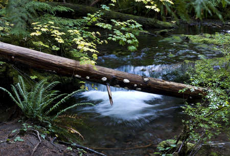 proxy falls: Fallen logs in creek close to Proxy Falls. 3 image stitch