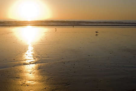 Sunset at the beach with the golden tones throwing the shorebirds in silhouette  photo