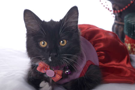 Horizontal Christmas themed image with a cute black kitten dressed up for the holiday