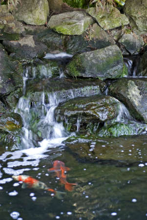 Vertical image of a waterfall feature and Koi pond