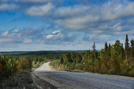 Rural gravel road in the forest