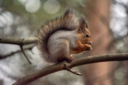squirrel sitting on a branch, eating a nut