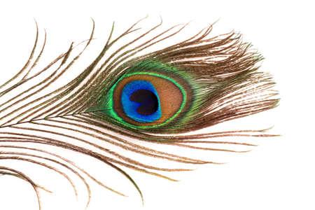 simbol: Peacock feather on white background Stock Photo