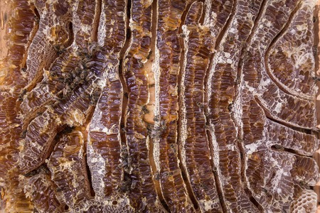 Close up view of honey filled honeycells and working bees Фото со стока