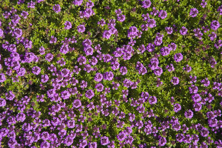 Bed of colorful Flowers Stock Photo - 9764415
