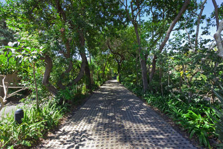Lush green tropical driveway with trees Stock Photo - 15616728