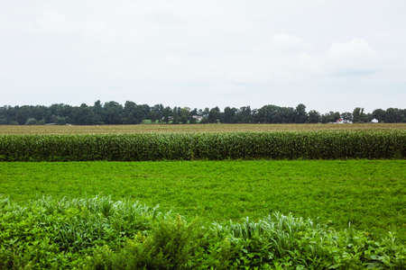 farm with corn crop in Amish country on an overcast afternoon photo