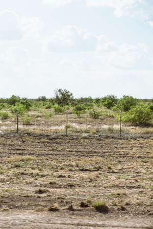 america countryside: field of trees in countryside Texas, America