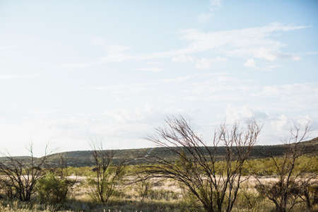 twiggy: dry country lanscade in Texas, America Stock Photo