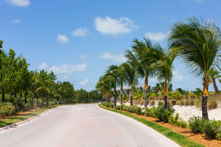 lonely road: A photograph of a road with beautiful palm trees Stock Photo