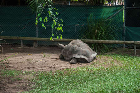 enclosure: Giant turtle photographed in its enclosure in a zoo