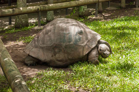 enclosure: Image of a big turtle taken in its enclosure in a zoo Stock Photo