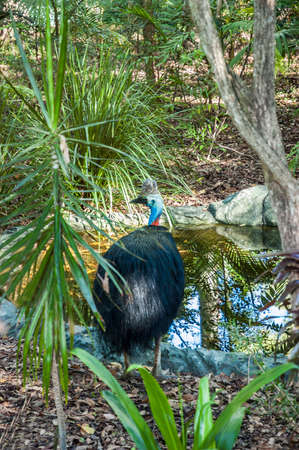 ecosystems: Big bird standing in front of an artificial swamp surrounded by plants Stock Photo