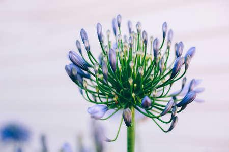 Purple flower Stock fotó