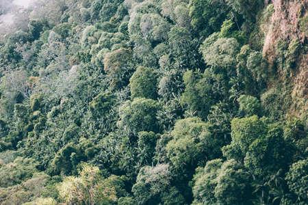 Green trees in Australian forest