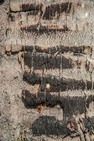 burnt wood: Some skin of coconut tree burnt wood texture Stock Photo