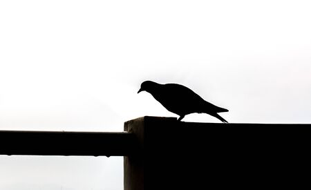overlooking: Silhouette of A Bird walk on wall Stock Photo