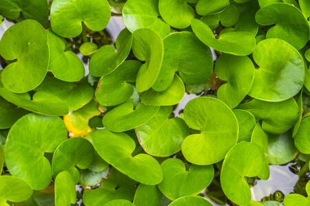 The The fresh water plants for background