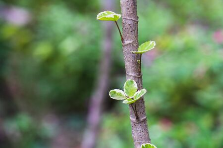 The Young tree seedling grow from stump, beginning new life and rebirth concept