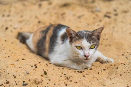 Portrait of cat lying on the sand