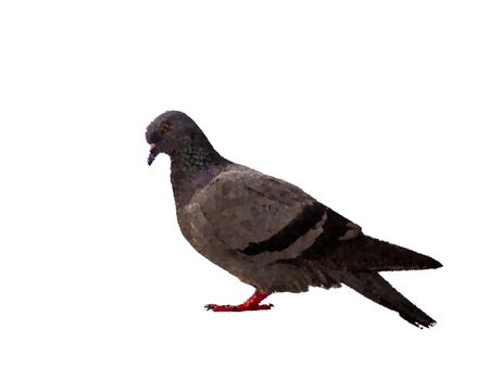 A Abstract Triangles line bird pigeon isolated on white background wild feral green blue.