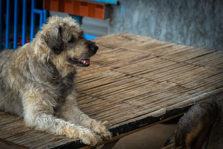 A Dog resting on a rural street in a village of Thailand during morning. Фото со стока