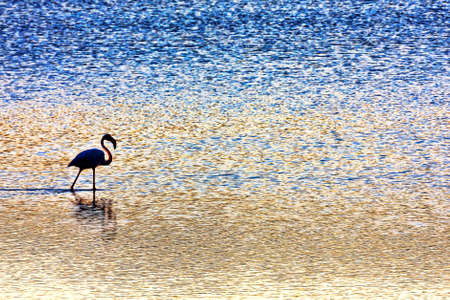 marshes: Flamingo strolling in the salt marshes at sunset Stock Photo