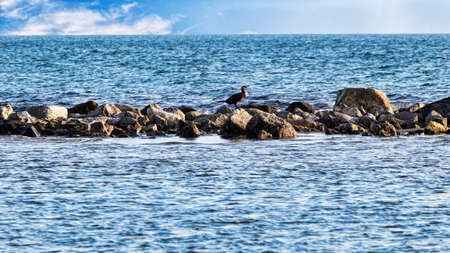 In the sea on the cliff a cormorant enjoys its sun bath Archivio Fotografico - 129623296