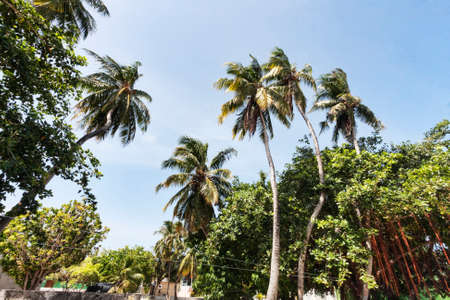 Beautiful tropical vegetation with palm trees and bushes in a sunny day Archivio Fotografico - 129623300