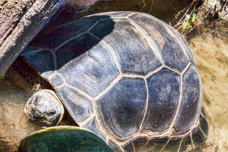 Huge and old land turtle is resting among the rocks in the pond Archivio Fotografico - 129623298