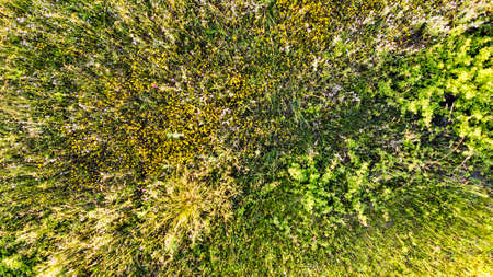Natural aerial abstract surface background top view of uncultivated meadow with colorful flowers, foliage plants and shrubs Фото со стока