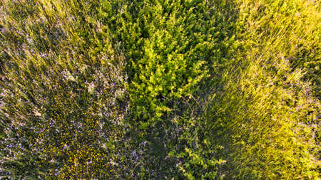 Natural aerial abstract surface background top view of uncultivated meadow with colorful flowers, foliage plants and shrubs Archivio Fotografico - 129623396