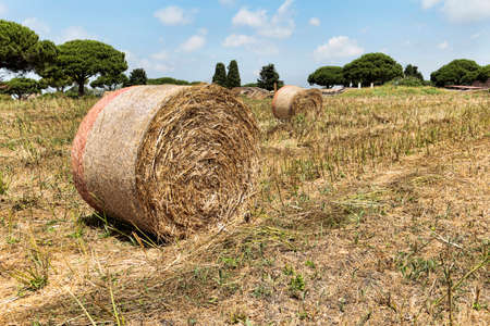 Beautiful landscape of agricultural field with hay ball and beautiful blue sky, hay ball it's used to feed cattle Archivio Fotografico - 129623436