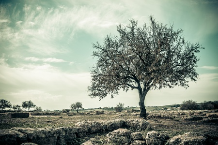 agrigento: Vintage Style landscape with Trees