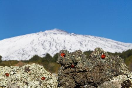 eruptive: Etna
