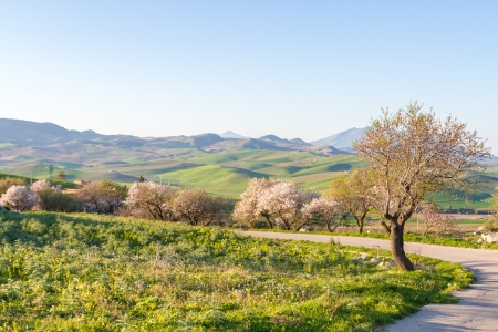 view of Trees in Sicily Stock Photo