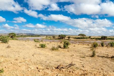 Savana landscape in Africa  Tsavo West, Kenya  Stock Photo