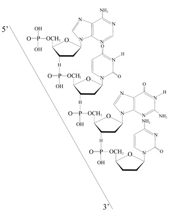 Outlined Deoxyribonucleic acid from 5  to 3