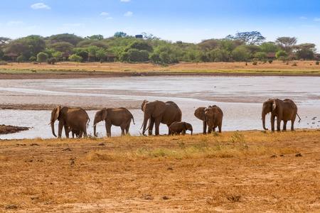 tsavo: Elephants Tsavo East National Park in Kenya Stock Photo