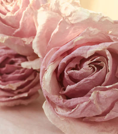 Stylish pink Dried Roses close up Banco de Imagens